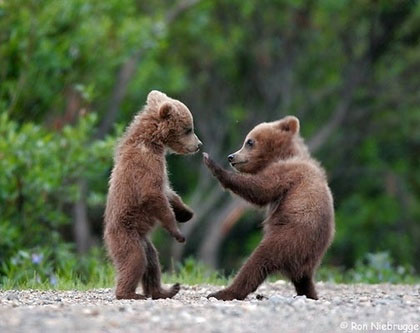 Everyone loves karate bears.