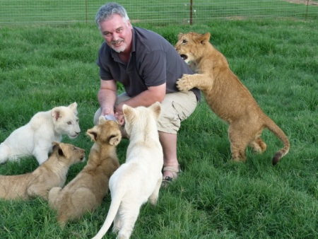 Lion attack.